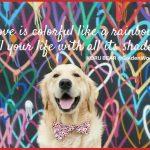 LOVE is colorful like a rainbow ...