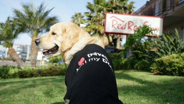 LOVE Traveling with Your Dog #RedRoofLuvsPets