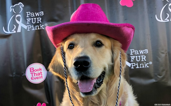 Paws Fur Pink - Canine Cancer Foundation