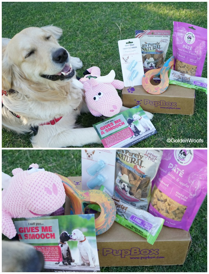 Pet Dental Month PupBox