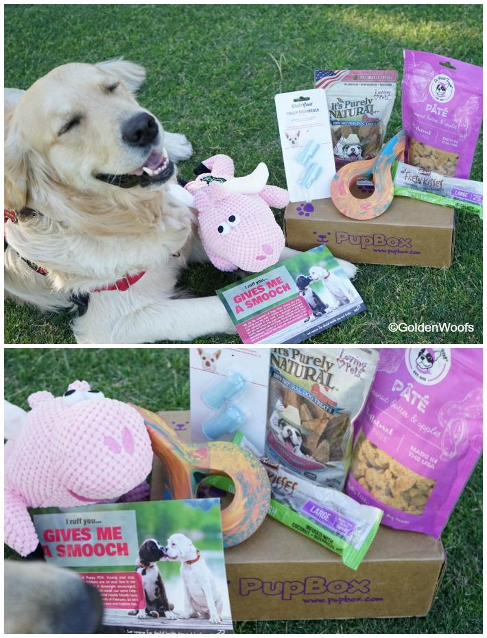 Pet Dental Month PupBox
