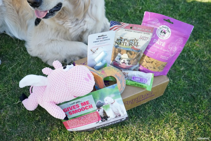 PupBox Pet Dental Month
