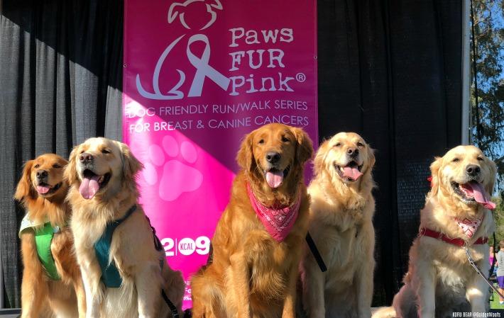 dog friendly 5k Paws Fur Pink
