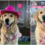 Paws Fur Pink | National Canine Cancer Foundation