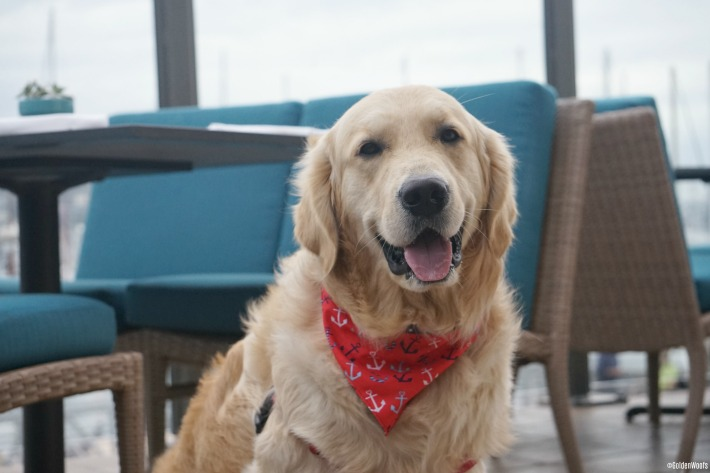 dog friendly Vessel Restaurant San Diego
