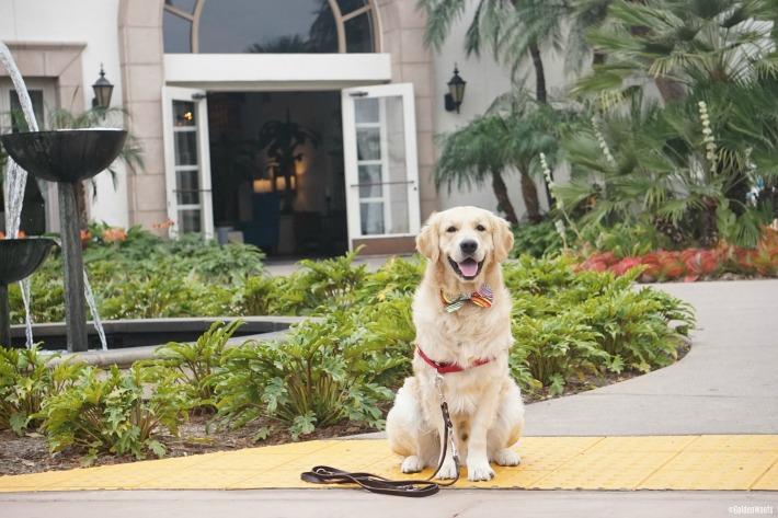 dog friendly hotel Kona Kai Resort San Diego