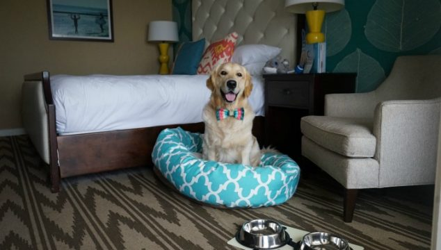 5 Reasons to Stay at Pet Friendly Kona Kai Resort San Diego