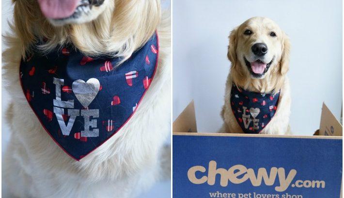 How Do I Look? LOVE Dog Bandana #ChewyInfluencer