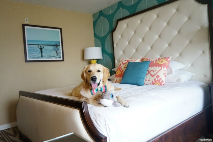 pet friendly hotel Kona Kai San Diego Shelter Island