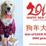 Happy Year of the Dog