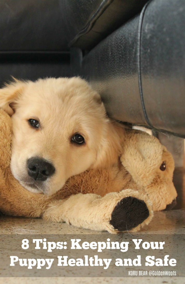 8 Tips Keeping Your Puppy Healthy and Safe