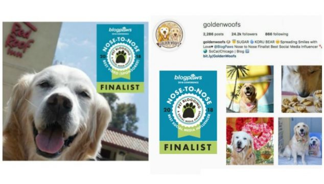BlogPaws Finalist Nose to Nose Awards