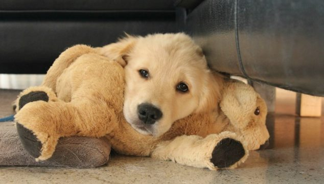 8 Tips: Keeping Your Puppy Healthy and Safe