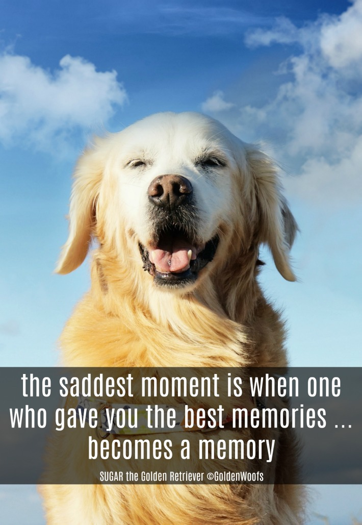 quote the saddest moment is when one who gave you the best memories ... becomes a memory