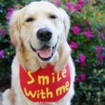 SMILE with ME | Share A SMILE Day
