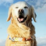 Remembering Rainbow Bridge Dog SUGAR