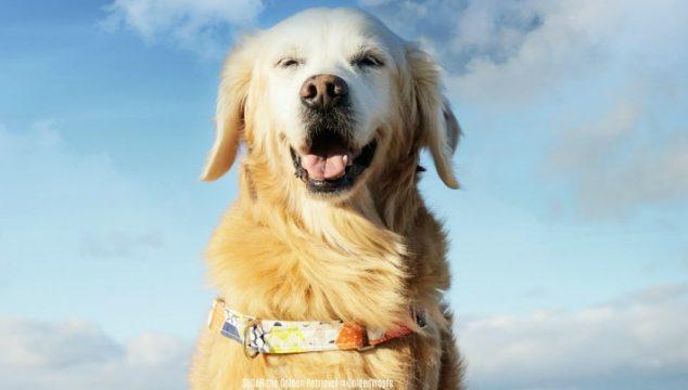 Remembering Rainbow Bridge Dog SUGAR