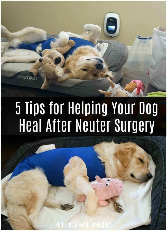 5 Tips for Helping Your Dog Heal After Neuter Surgery