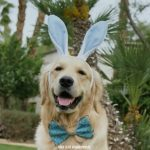 Eggciting First Easter | Easterdog KORU BEAR