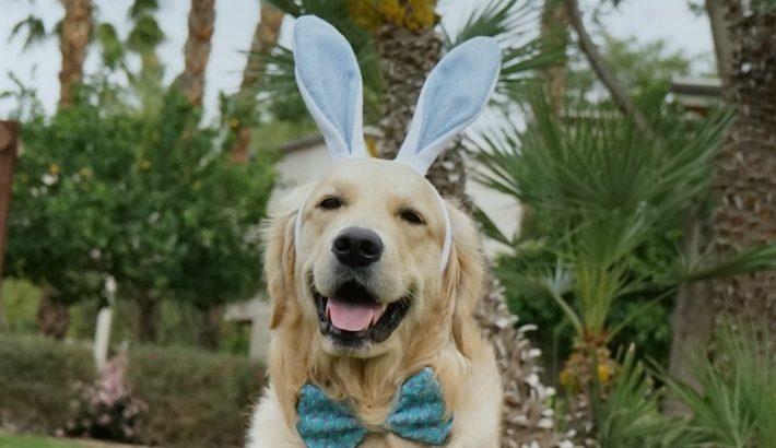 Eggciting First Easter | Easterdog KORU BEAR