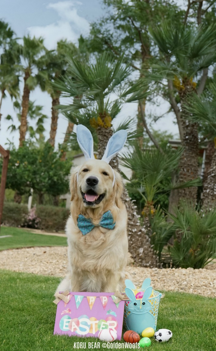 Eggciting First Easter Easter Dog