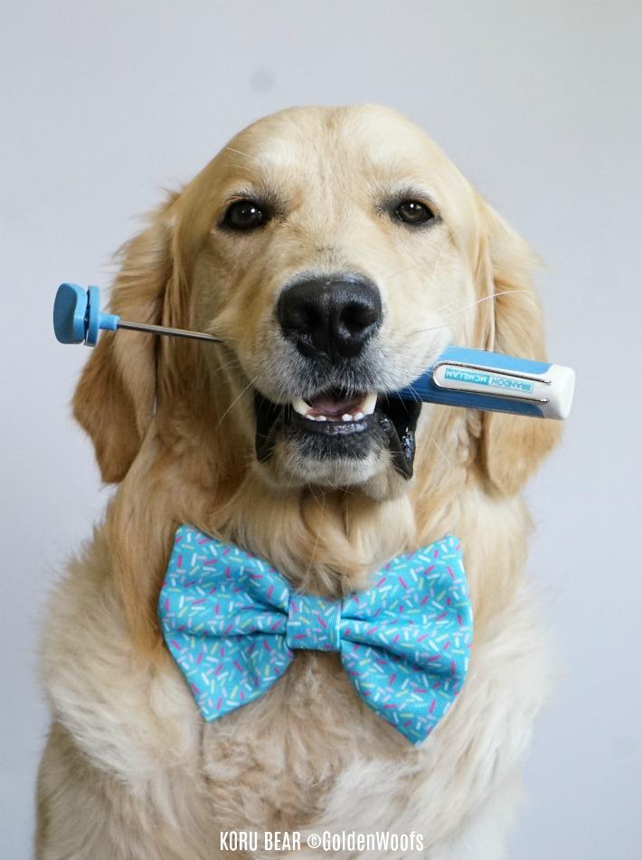 Lure Stick dog training tool from Petmate Brandon McMillan
