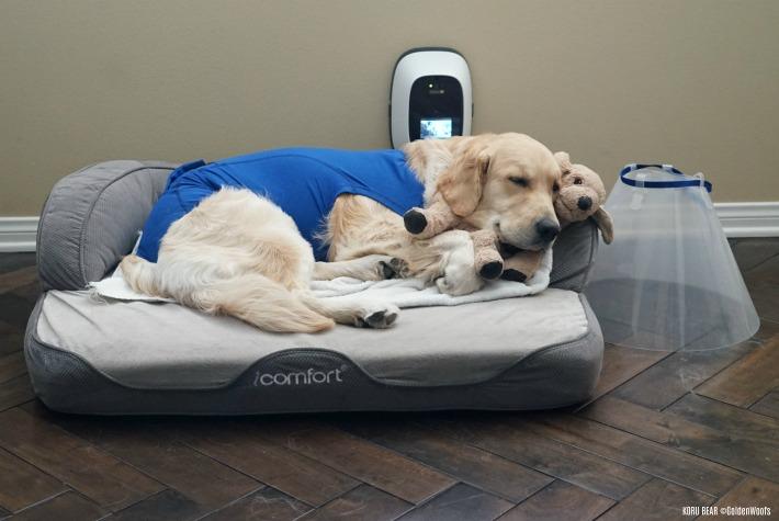 Dog Collar Provide By Vet