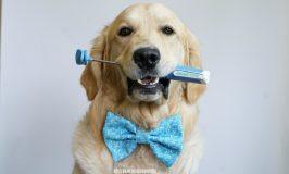 Dog Training Tool Lure Stick