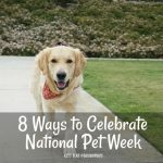 8 Ways to Celebrate National Pet Week