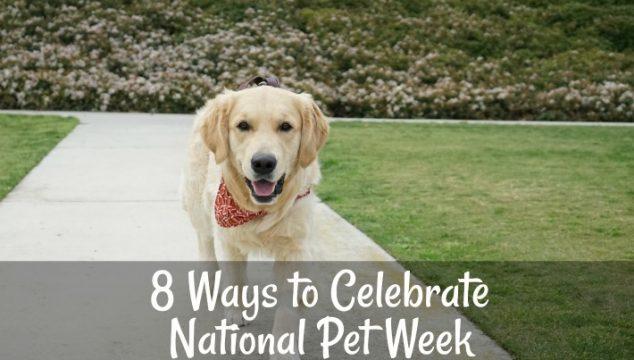 8 Ways to Celebrate National Pet Week