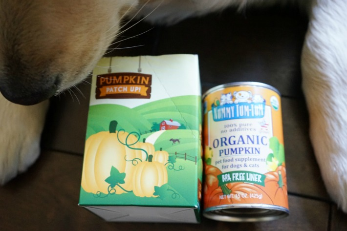 Pumpkin for dog's digestion