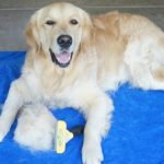 Minimize Dog Shedding with FURminator #ChewyInfluencer