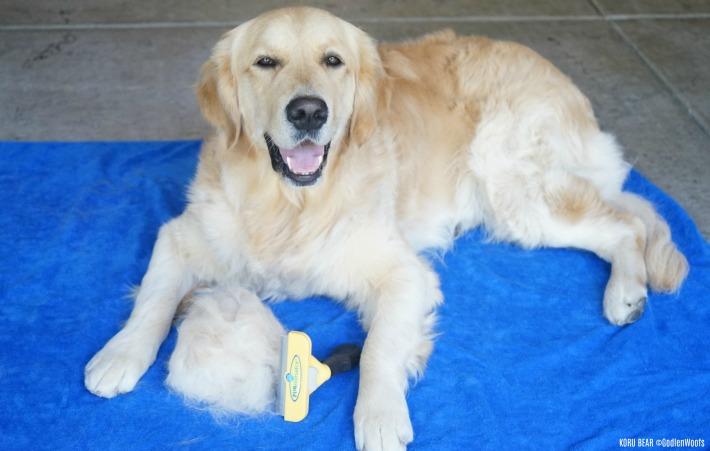Minimize Dog Shedding with FURminator #ChewyInfluencer