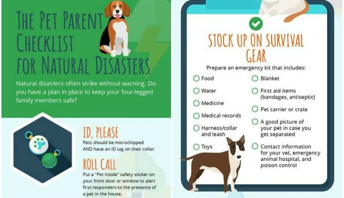 Infographic | Natural Disaster Checklist For Pet Parents