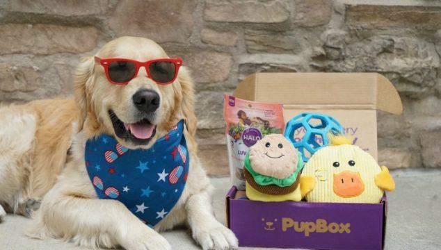 Puppy Selfie Tips #PupBox