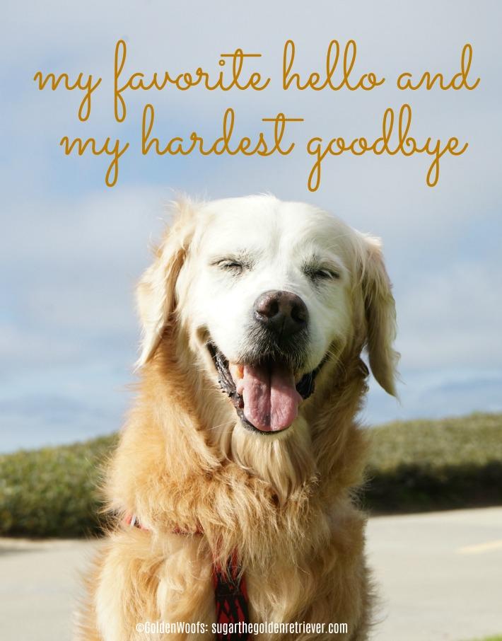 world pet memorial day - hardest goodbye