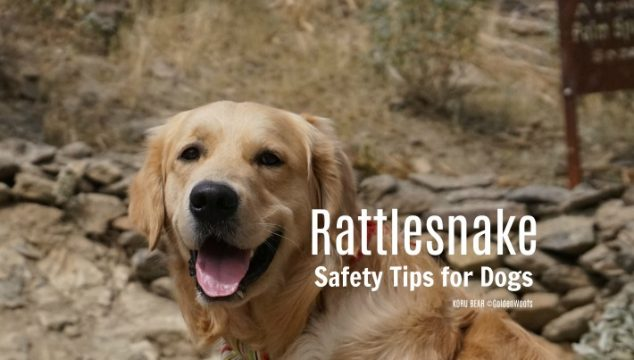 Rattlesnake Safety Tips for Dogs