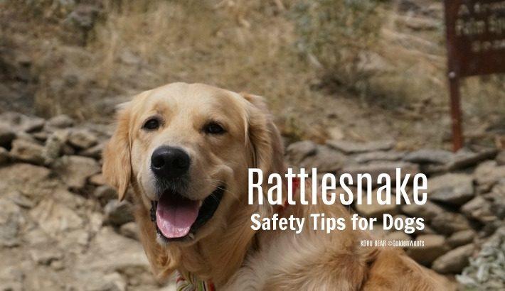 Rattlesnake Safety Tips for Dogs