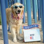 Chewy Goody Box Made in the USA for Dogs #ChewyInfluencer