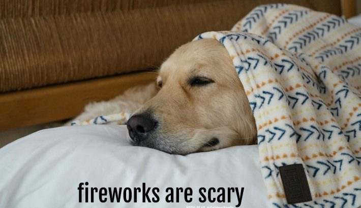 Fireworks are Scary