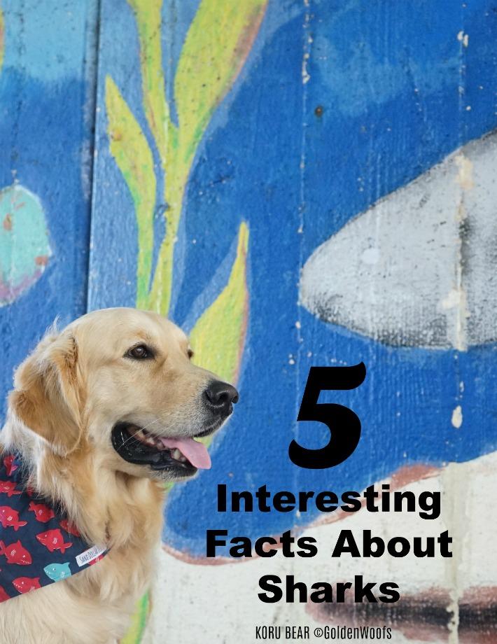 shark week facts about sharks