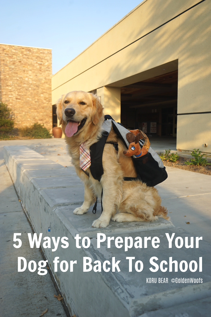 Prepare Your Dog For Back to School