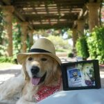 Start a Pet Travel Fund