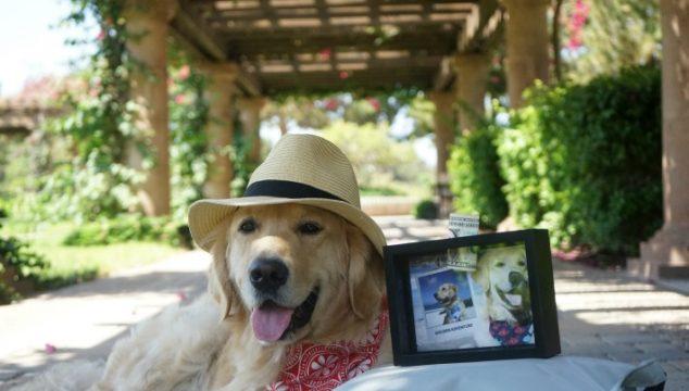 Start a Pet Travel Fund