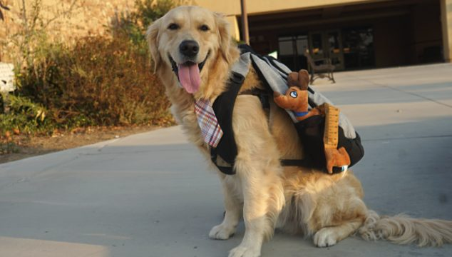 5 Ways to Prepare Your Dog for Back to School