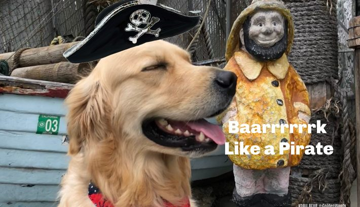 Bark Like A Pirate | What's Your Pet's Pirate Name?