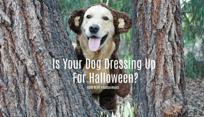 Is Your Dog Dressing Up For Halloween?