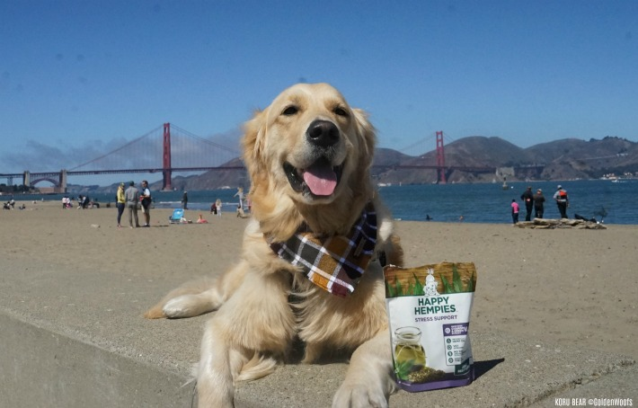 Health Benefits of Hemp for Dogs