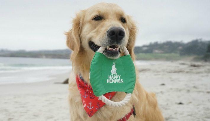 Health Benefits of Hemp for Dogs   Happy Hempies