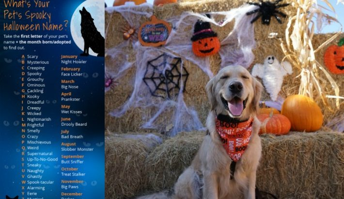 What's Your Pet Spooky Halloween Name?